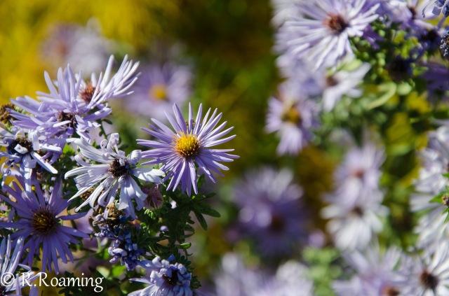Arboretum-PurpleFlowers2-1